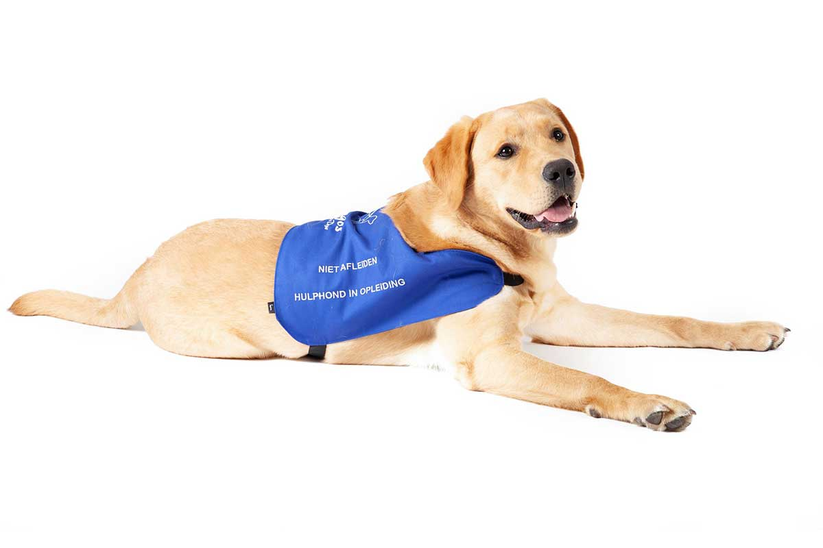 Argos Assistance Dogs